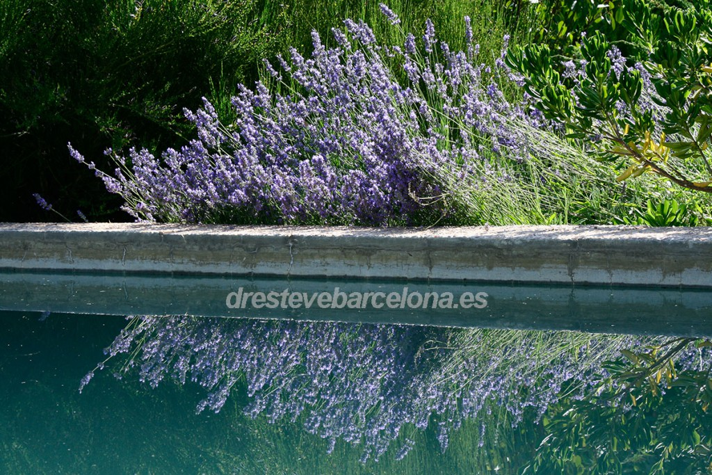 Psicoterapia eficaz - Dr. Esteve Barcelona